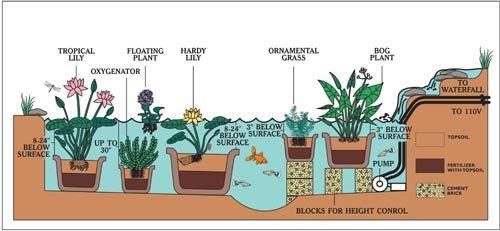 Cutrine water garden and pond setup diagram garden for Koi pond diagram