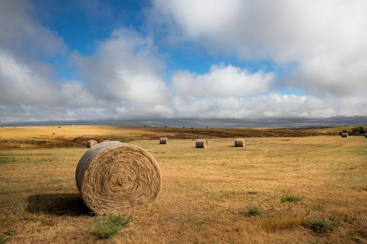 Hay Bale Print Rural Decoration Country Home Decor Great Plains Artwork Prairie Picture Rural Photo 5x7 to 30x45. Title: A Day on the Prairie. Hay bales dot the landscape in this beautiful scene capture on the Great Plains of South Dakota. This listing is for a professional quality print on archival photo paper that will be resistant to fading for 100 years. The print also comes with a card that provides details about the image (Title, location & story behind it) that makes it perfect for...