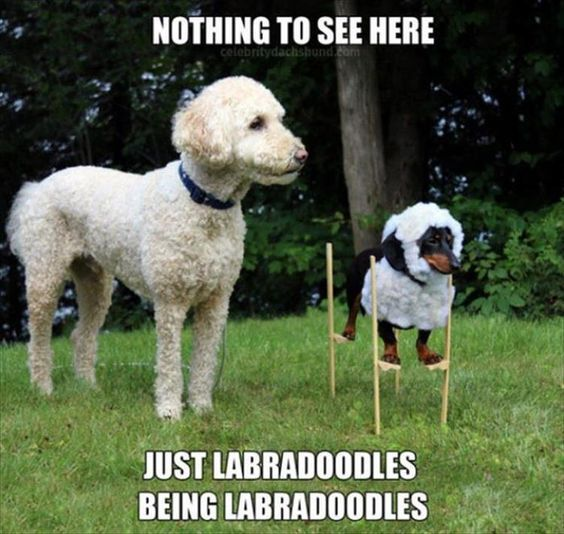 36dc3070f22177dfaf5932a0f12d9a92 pet memes funny animal memes best 25 pet memes ideas on pinterest funny pet memes, funny dog,Hilarious Animal Memes