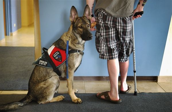 Dogs help stressed U.S. military veterans cope with civilian life - U.S. News