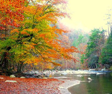 Beautiful%20Fall%20Foliage%20Around%20the%20World:%20Knoxville,%20TN