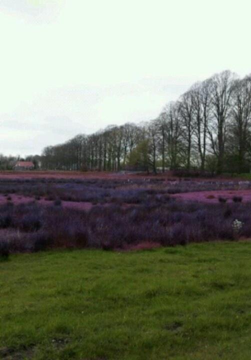Achterhoek Gelderland Nederland Mooi!!