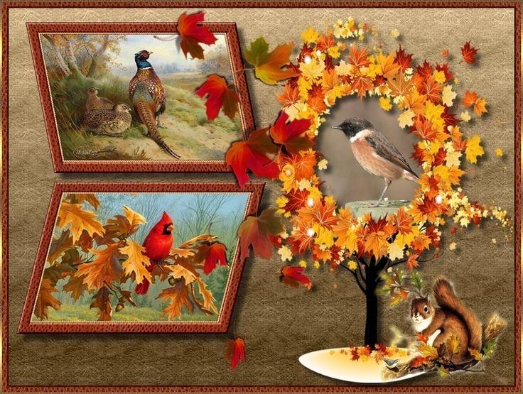 ősz:mókus és madarak