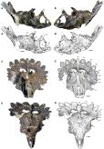 A New Horned Dinosaur Reveals Convergent Evolution in Cranial Ornamentation in Ceratopsidae: Current Biology