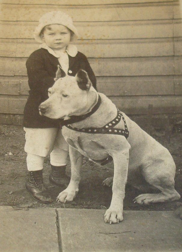 Rare Vintage Brass Pit Bull Terrier American Bull Dog ...  |American Pit Bull Terrier Vintage