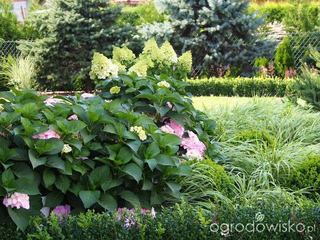 Marzenia i plany vs. rzeczywistość - strona 218 - Forum ogrodnicze - Ogrodowisko