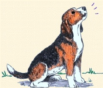 .: Beagles