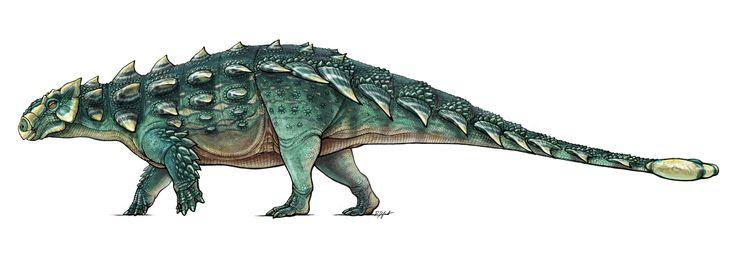 Illustration of Zuul Crurivastator, new species of ankylosaur. (Illustration courtesy of Danielle Dufault, Royal Ontario Museum)