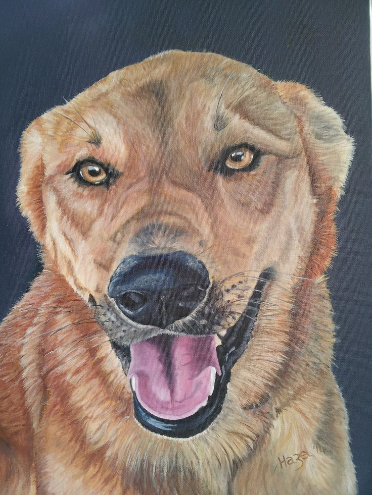 'Betty' To commission a pet portrait drop me a line at new.life1965@hotmail.com Gift vouchers also available
