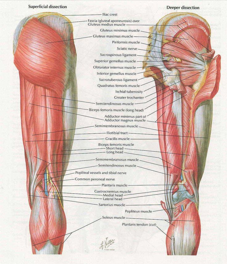 Tolle Quad Muskelanatomie Galerie - Anatomie Ideen - finotti.info