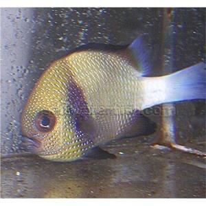Fish Tank Easy Maintenance Easy Fish Tank Care And