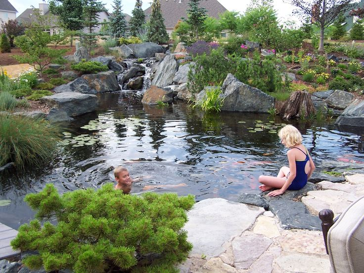 426 best images about swim pond on pinterest swim pools for Koi pond next to swimming pool