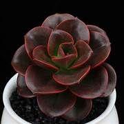 Best 25+ Cuidado de los cactus ideas on Pinterest ...