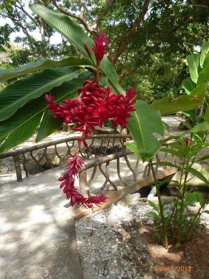 Fleurs au Parc Gumbalimba