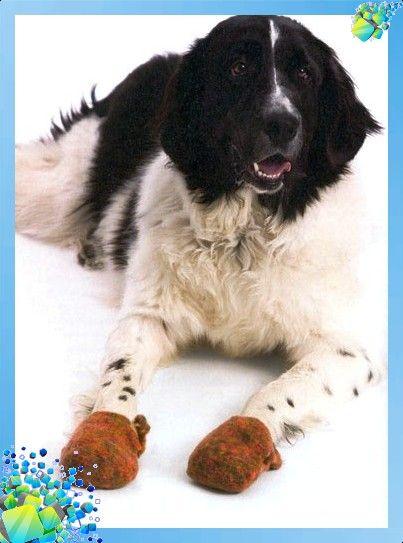 Тапоки для собаки методом валяния обувь ботиночки для собаки