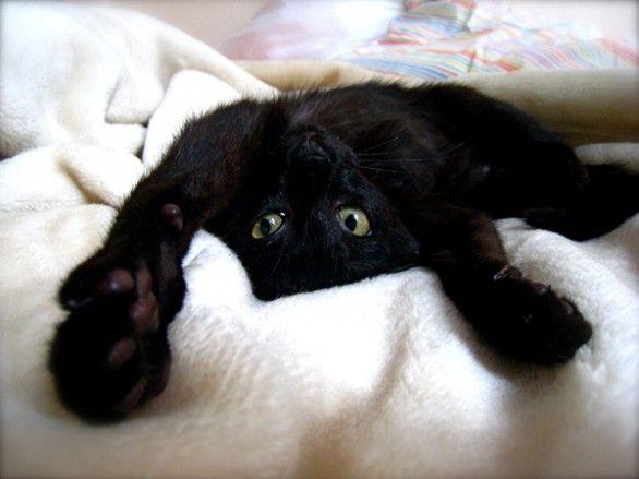 Gattino nero che si diverte