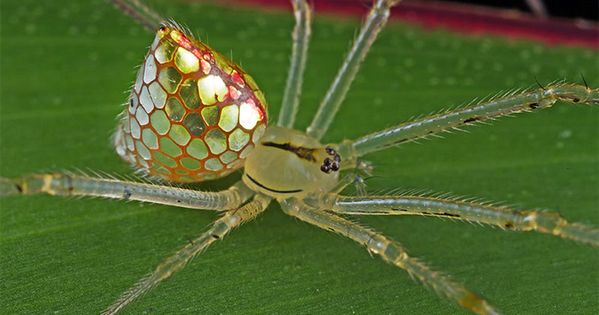 Image result for cool spiders