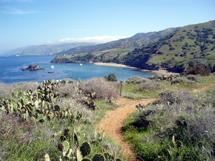17 best images about places catalina island on pinterest for Catalina bay