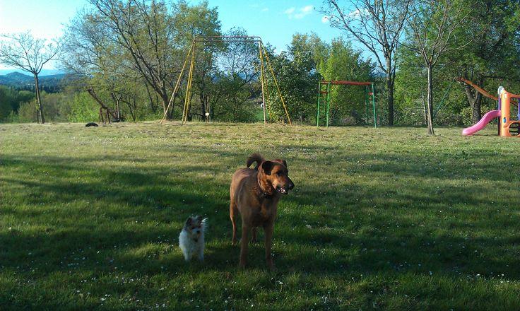 Les chiens du Mas Cauvy
