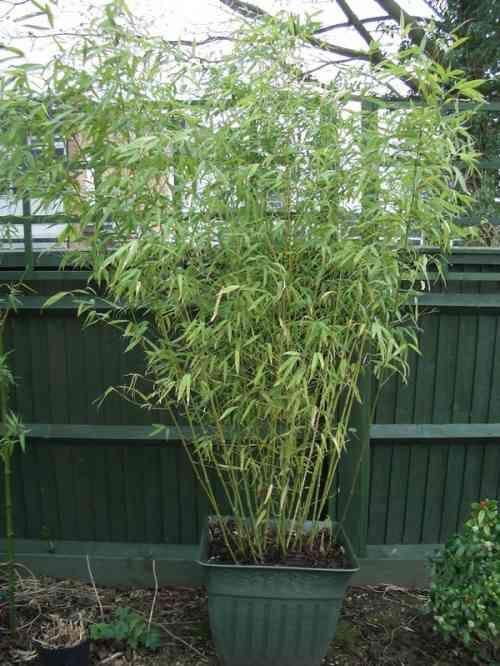 Jardiniere Bois Pour Bambou : Jardiniere Bambou sur Pinterest Jardiniere Pour Bambou, Bambou et Le