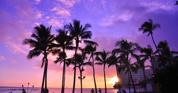 ハワイ新婚旅行で間違いない人気リゾートホテル3選~ホノルル・ワイキキ編~| Find Travel(ファインドトラベル)