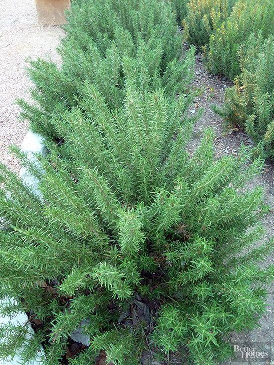 M s de 25 ideas en tendencia sobre jardiner a en texas en for Jardinera plantas aromaticas