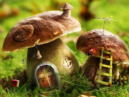 Undo The Dry Spell: Mushrooms And Fungi 4 The Fairy Tale