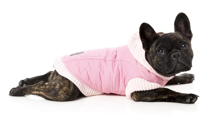 The winter weather is still lingering, peeps! Make sure your dog tackles the cold in #FuzzYard style! #hurryupsummer