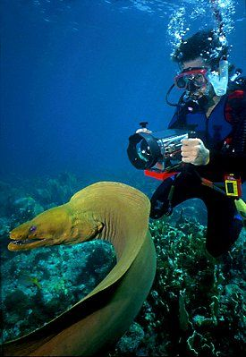 A stunning underwater shot of a Moray eel while #SCUBA diving in the #FloridaKeys