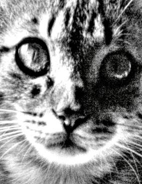 Animals htpp://www.immaginiimmagini.com