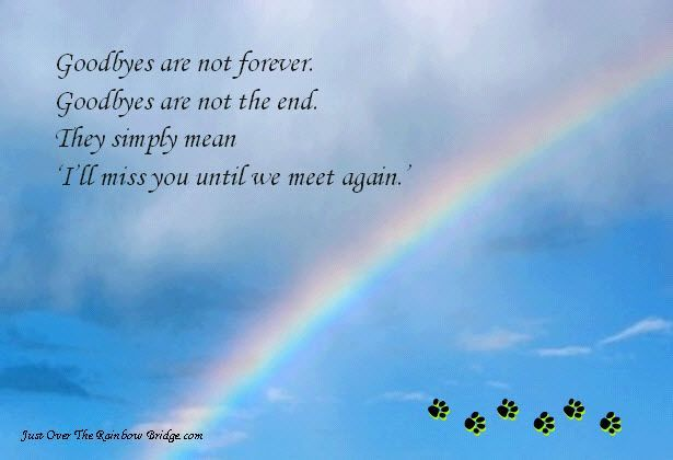 pet loss quotes pet loss when it matters most