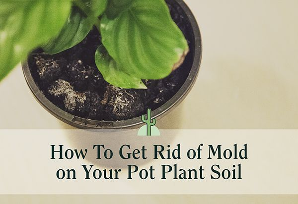 Pin On Ridding Pot Soil Of Mold