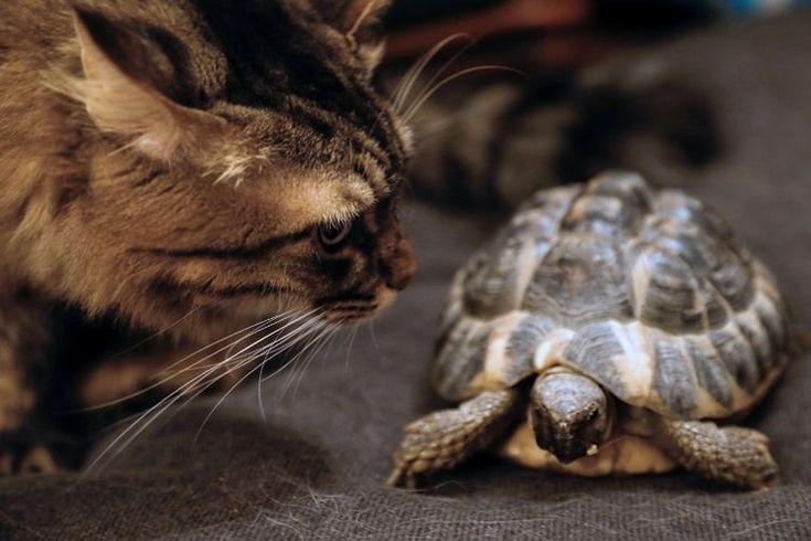 Le statut des animaux progresse dans le Code civil :) ^^
