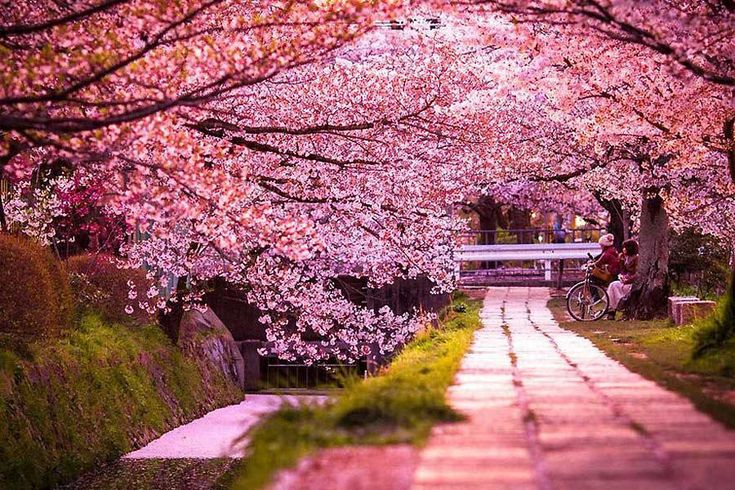 Japan Cherry Blossom Tour - Garden Tour Hub