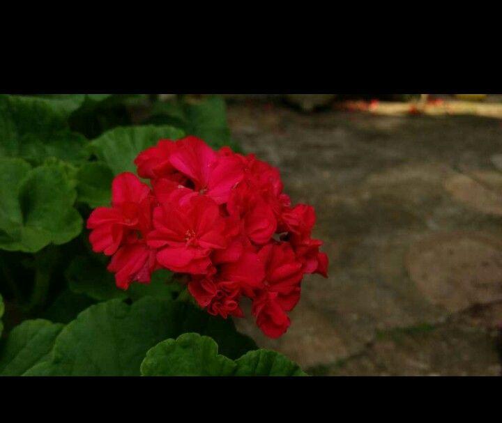 Resalta la flora maravillosa de Barichara inspira vida por su forma y color llamativo.