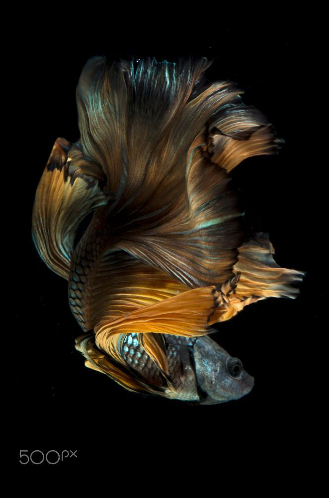 52 Best Fish Tank Assorted Images On Pinterest Fish