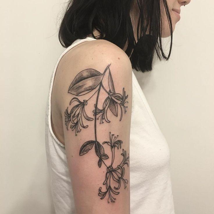 top honeysuckle vine images for pinterest tattoos. Black Bedroom Furniture Sets. Home Design Ideas