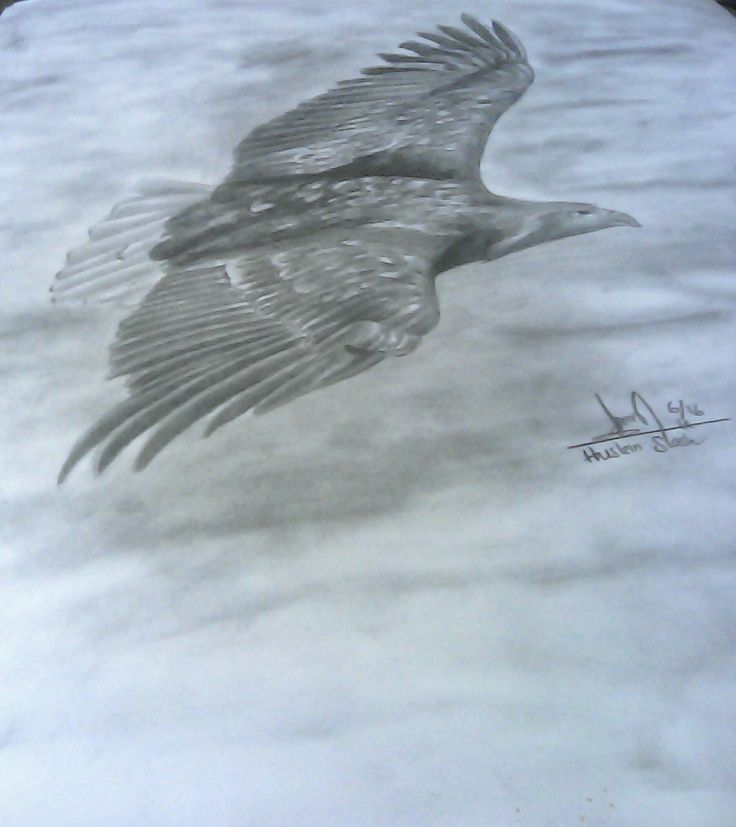The Eagle on paper