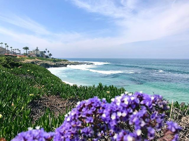 La Jolla Cover, so beautiful and lovely.  #motivation #passion #vacation #dream #usa #goals #enjoy #여행 #오늘 #active #noexcuses #바다 #바캉스 #얼스타그램 #focus #appreciation #waves #happy #love #beach #amazing #photooftheday #fit #awesome #landscape #exercise #cali #lajolla #scenery #instagood #lajollalocals #sandiegoconnection #sdlocals - posted by Ke Sung  https://www.instagram.com/kesung1. See more post on La Jolla at http://LaJollaLocals.com
