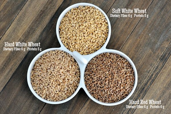Mel's Kitchen Cafe | Wheat and Wheat Grinding 101: The Wheat {Types, Where to Buy, and What to Make}