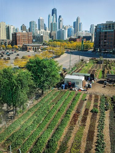 For more on the flourishing urban farm scene in Chicago, including CITY FARM shown here, see http://www.pinterest.com/wrenvironment/urban-harvest/