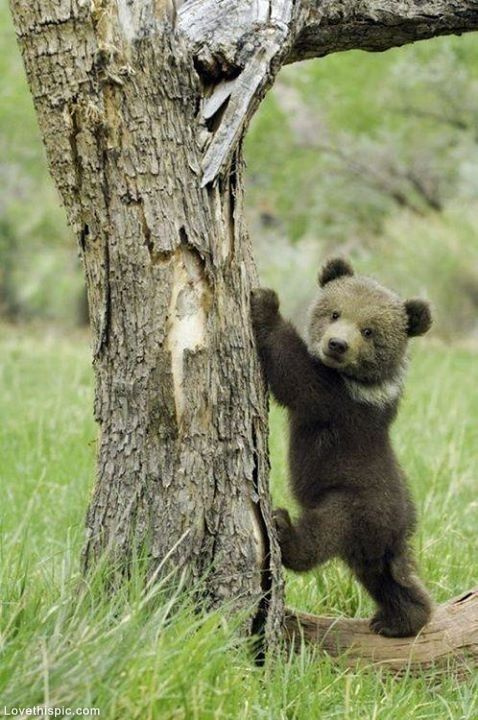 So Cute Bear Cub Pictures, Photos, and Images for Facebook, Tumblr, Pinterest, and Twitter