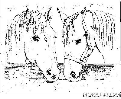 Les 25 meilleures id es de la cat gorie coloriages de - Coloriage de chevaux ...
