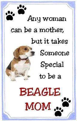 Beagle MOM!!!
