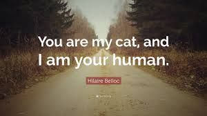 Image result for hilaire belloc cat