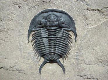 Trilobite!!!!!