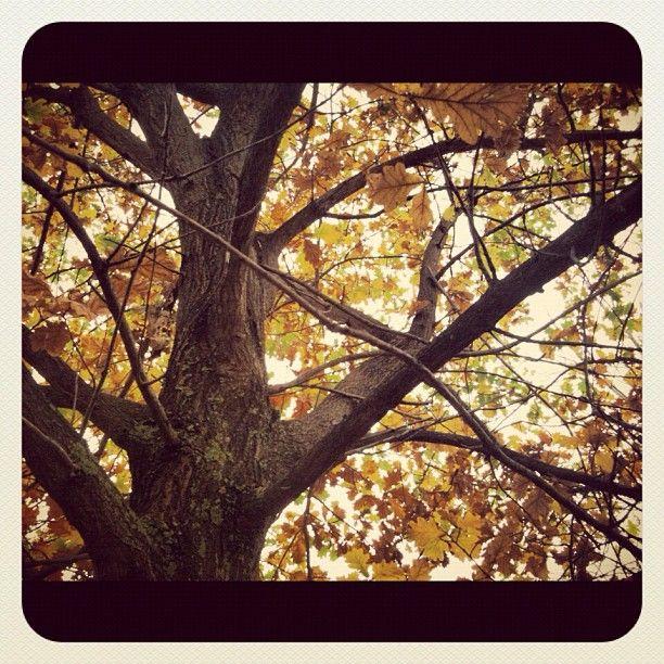 Instagram - autumn