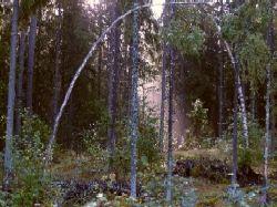 Vahteriston luonnonsuojelualue.