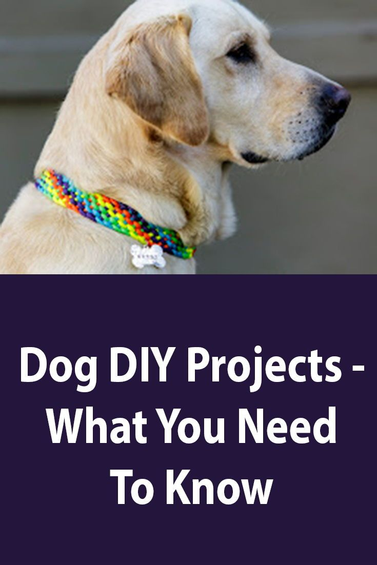 The Ultimate Guide To Dog Diy Projects Dogs Guard Dog Training