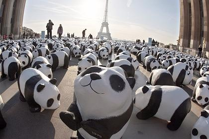 1,600 paper maché pandas to represent each of the remaining 1,600 pandas left in the wild
